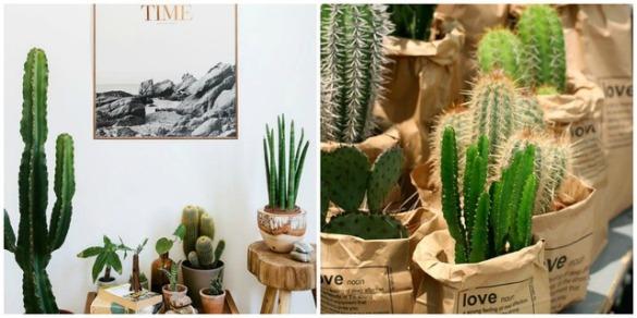 cactus-mejicano